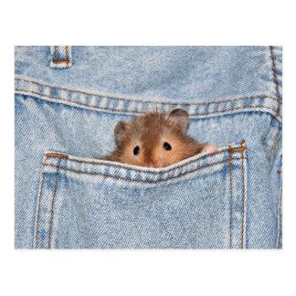 Pocket pet postcard