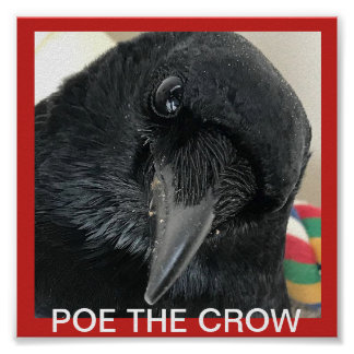 Poe The Crow Poster