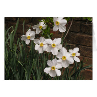 Poet's Narcissus (N. 'Actea') Card