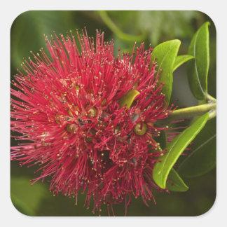 Pohutukawa Flower, Dunedin Square Sticker