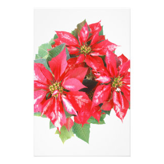Poinsettia Christmas Star transparent PNG Stationery
