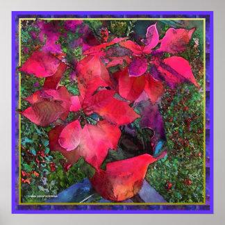 Poinsettias 2 Poster