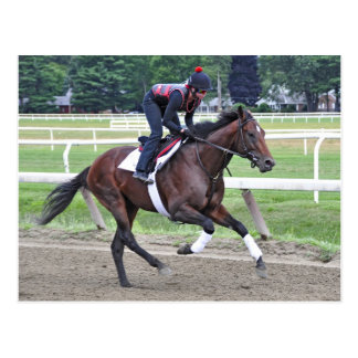 """""""Point of Entry"""" Champion Turf Horse Postcard"""