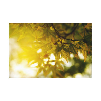 Pointed maple in spring gallery wrapped canvas