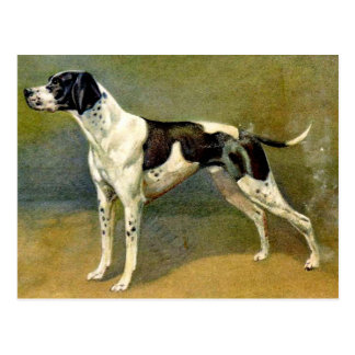 Pointer Dog Vintage Art Design Postcard