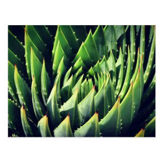 Pokey Succulent Postcard