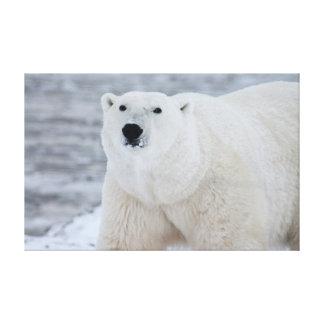 Polar bear gallery wrap canvas