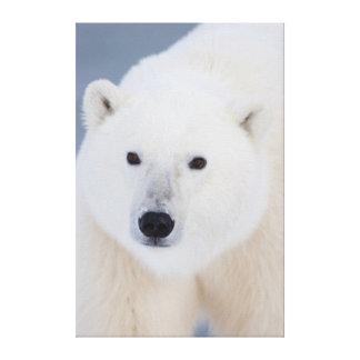 Polar Bear Canvas Prints