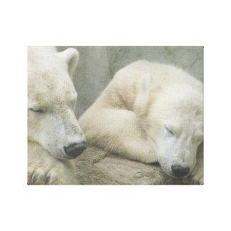 Polar Bear Stretched Canvas Prints