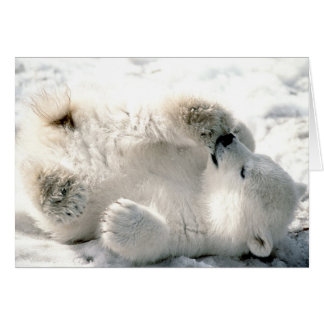Polar Bear Cub Card
