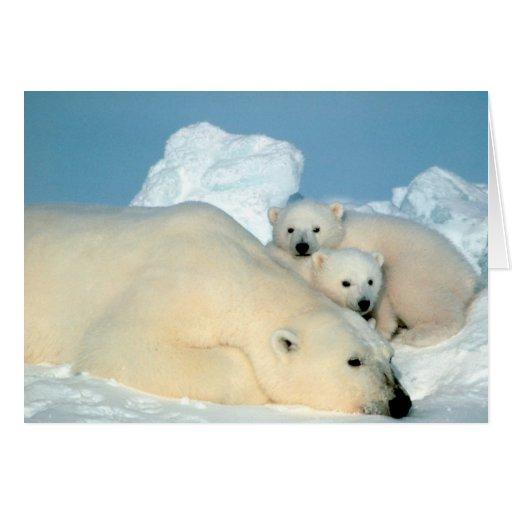 Polar Bear & Cubs by Steve Amstrup Card