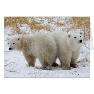 Polar Bear Cubs Card