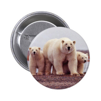 Polar Bear Female with Young Pinback Buttons