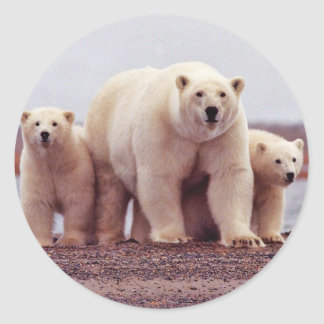 Polar Bear Female with Young Round Sticker