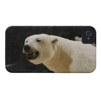 Polar Bear Grin iPhone 4 Case-Mate Cases