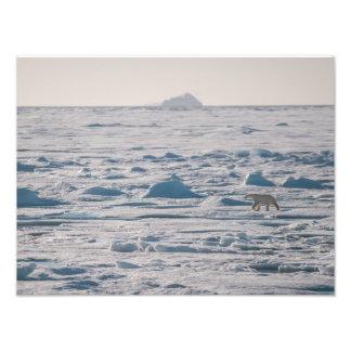 Polar Bear in Lancaster Sound (Tallurutiup Imanga) Photo Print
