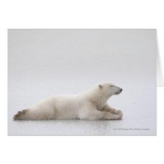 Polar Bear Laying On A Lake Of Ice Card