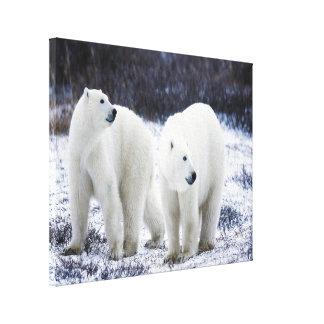 Polar Bear Love Canvas Print