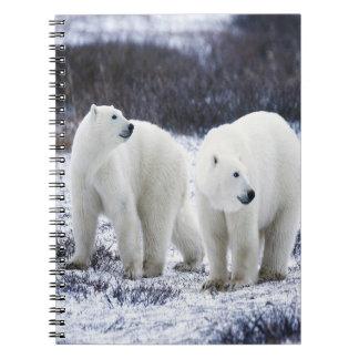 Polar Bear Love Notebooks