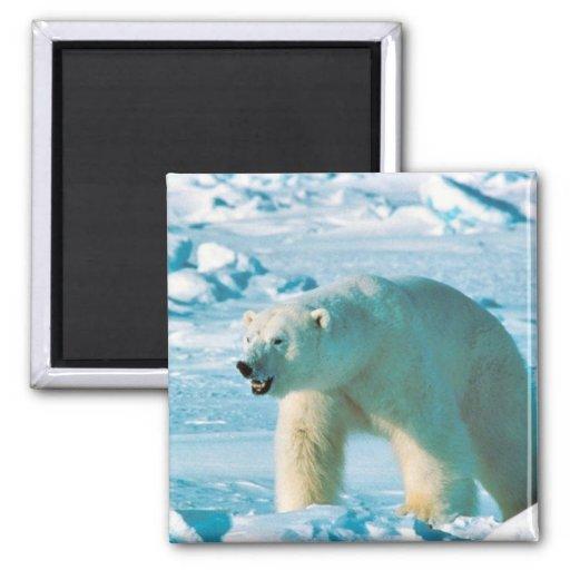 Polar Bear Fridge Magnets