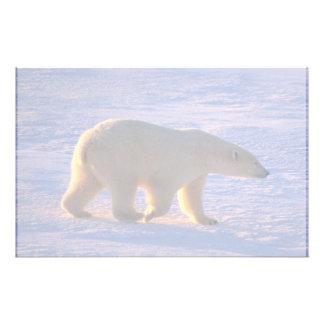 Polar Bear Morn Custom Stationery