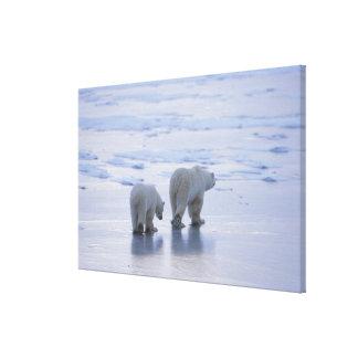Polar Bear Mother and Cub Canvas Prints