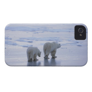 Polar Bear Mother and Cub iPhone 4 Case