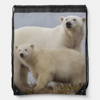 Polar bear mother and her cub rest in the tundra drawstring backpacks