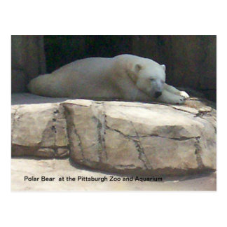 Polar Bear Postcard