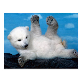 polar-bear postcard