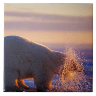 Polar bear pulling its head out of a hole in the ceramic tile