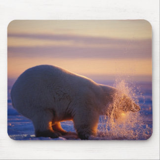 Polar bear pulling its head out of a hole in the mouse pad
