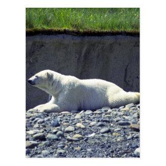 Polar Bear Reclining, Left Profile Postcard
