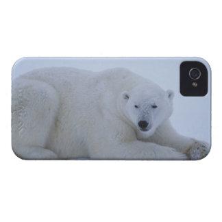 Polar Bear Resting in Snow iPhone 4 Cases