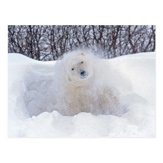 Polar bear shaking snow off on frozen tundra postcard