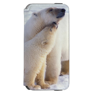 Polar bear sow with cub, pack ice of the incipio watson™ iPhone 6 wallet case