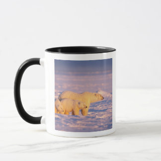Polar bear sow with spring cubs on the frozen mug