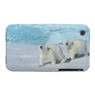 Polar bear, two cups on pack ice, Ursus iPhone 3 Cases