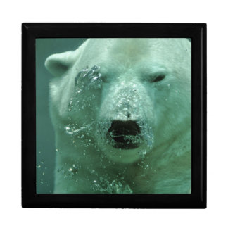 Polar Bear Under Water Gift Box