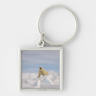 polar bear, Ursus maritimus, in rough ice on Silver-Colored Square Key Ring