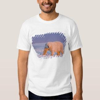 polar bear, Ursus maritimus, on ice and snow, 2 T Shirts