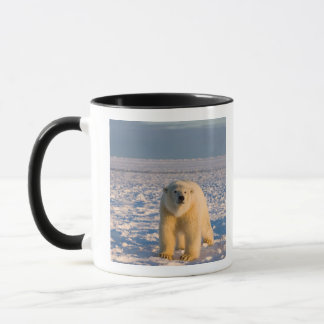 polar bear, Ursus maritimus, on ice and snow, Mug