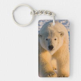 polar bear, Ursus maritimus, polar bear on ice Double-Sided Rectangular Acrylic Key Ring
