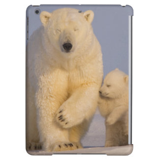 polar bear, Ursus maritimus, sow with newborn 3