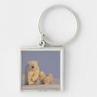 polar bear, Ursus maritimus, sow with newborn 3 Silver-Colored Square Key Ring