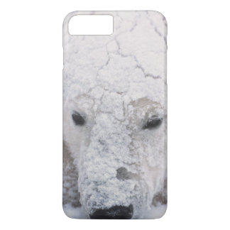 Polar Bear, Urus Maritimus, Arctic, Churchill, iPhone 7 Plus Case