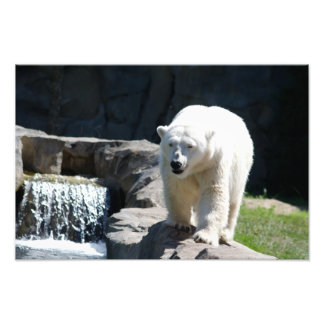 Polar Bear with Waterfall Photograph