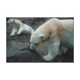Polar Bears Canvas Prints