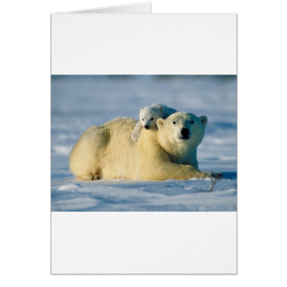 polar bears card
