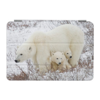 Polar Bears female and Two cubs iPad Mini Cover